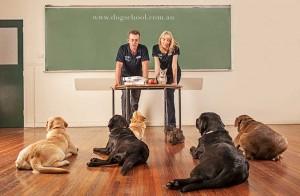 doggy_school2
